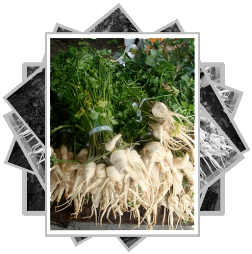 parsleyroot