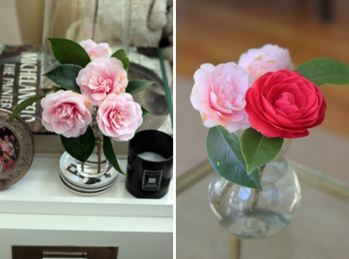Camellias - pink and red