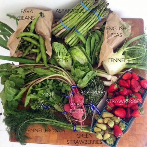 Farmer's-Market-Bounty